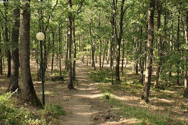 bosco-faiete